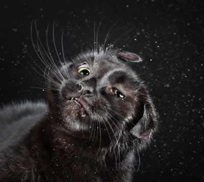 Shake Cats, para quem é gateira 2