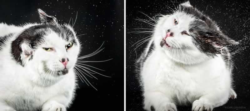 Shake Cats, para quem é gateira 3